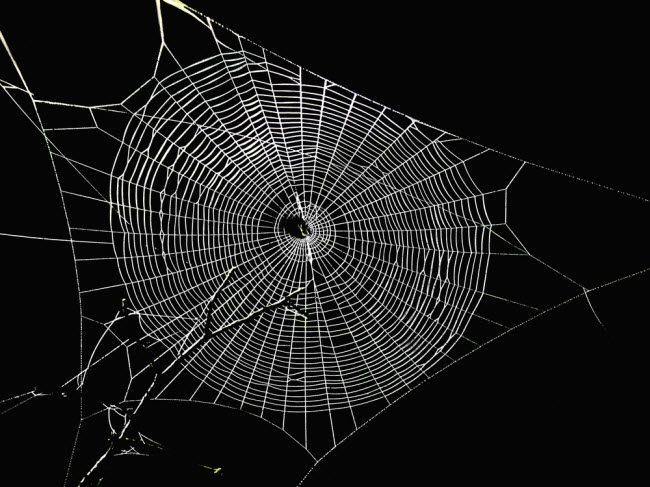 Darknet Hell forum web